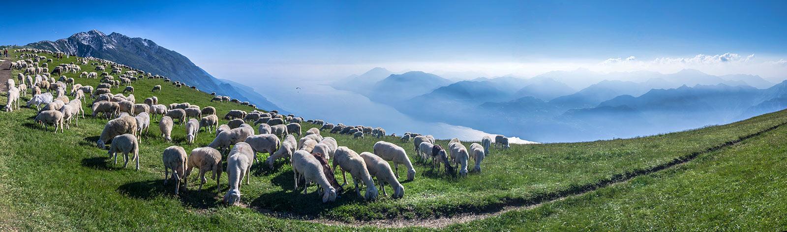 Monte Baldo Malcesine Gardasee